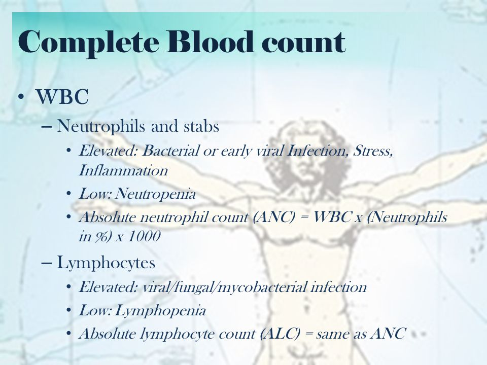 Complete Blood count WBC Neutrophils and stabs Lymphocytes
