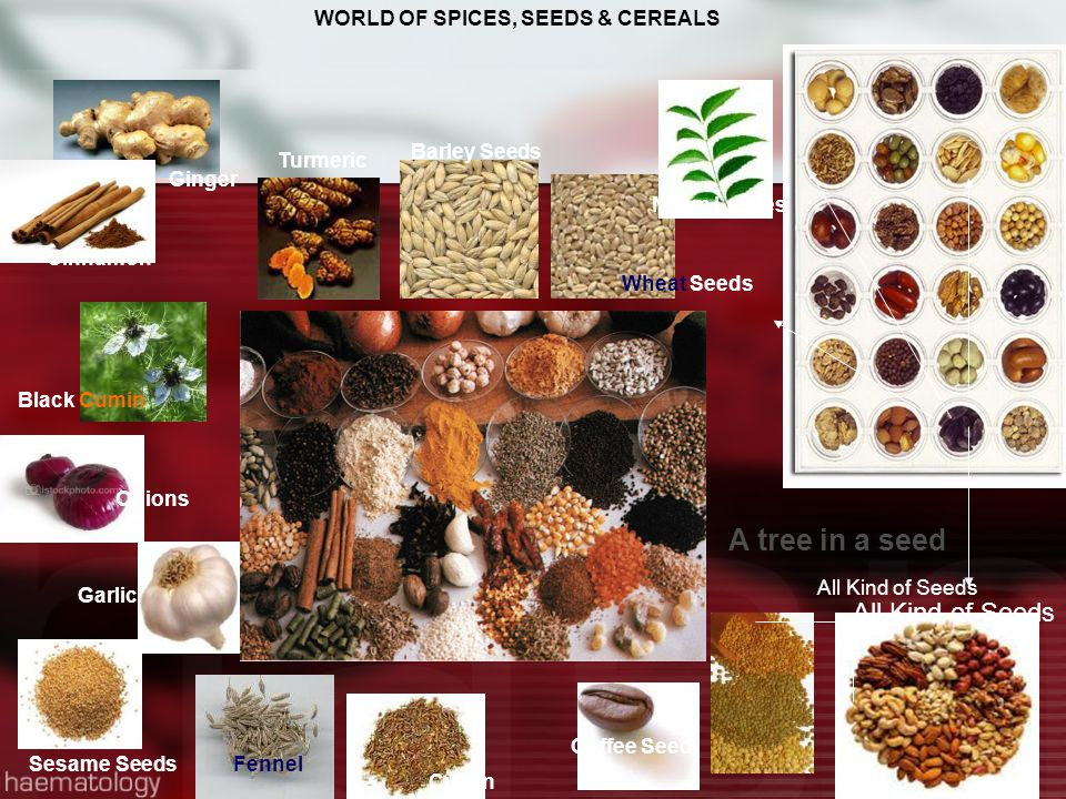 WORLD OF SPICES, SEEDS & CEREALS