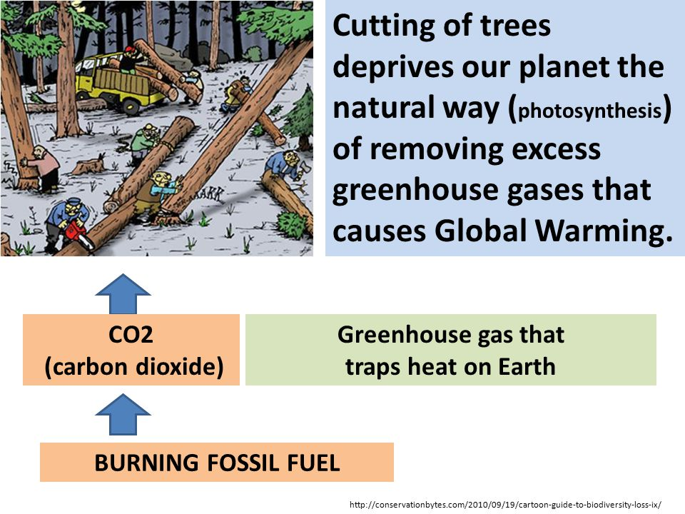 Cutting of trees deprives our planet the natural way (photosynthesis) of removing excess greenhouse gases that causes Global Warming.