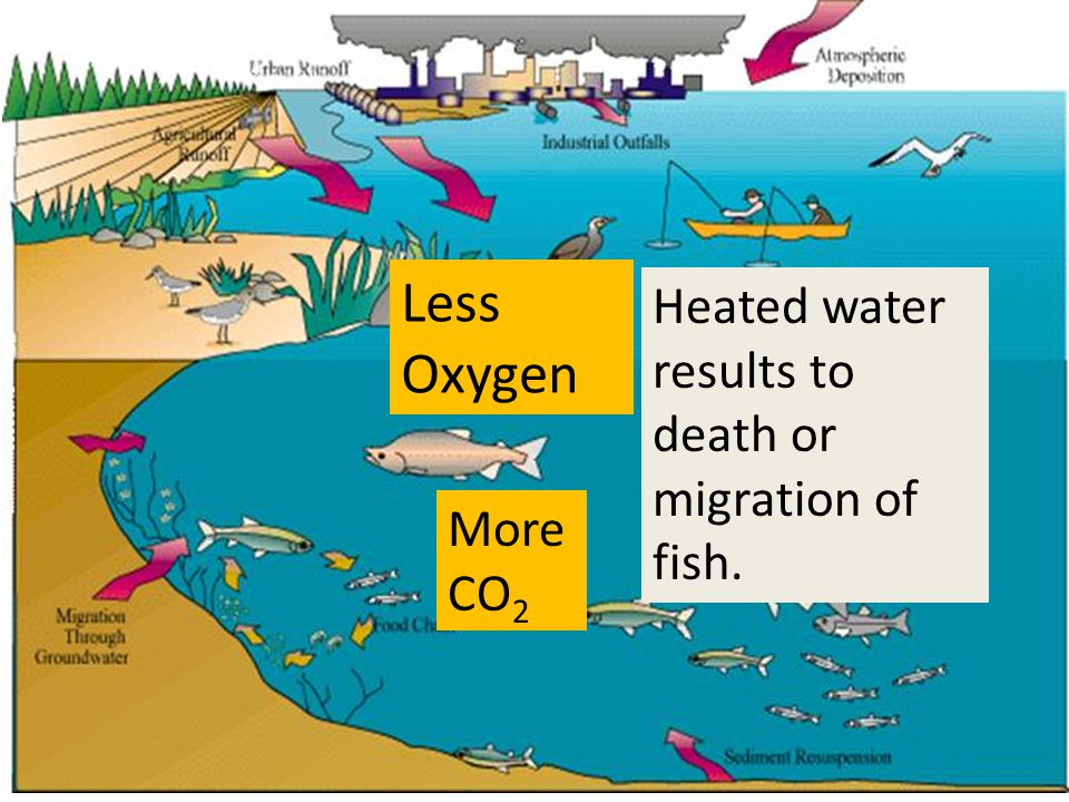 Less Oxygen Heated water results to death or migration of fish.