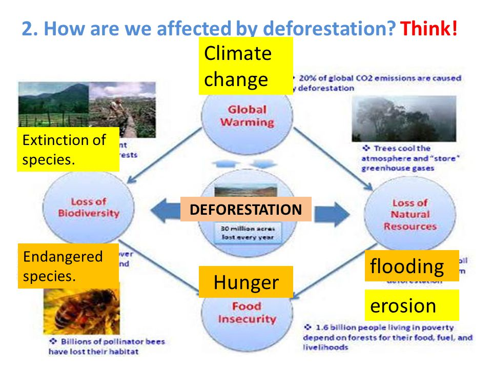 2. How are we affected by deforestation Think! Climate change