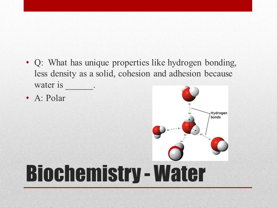 Q: What has unique properties like hydrogen bonding, less density as a solid, cohesion and adhesion because water is ______.