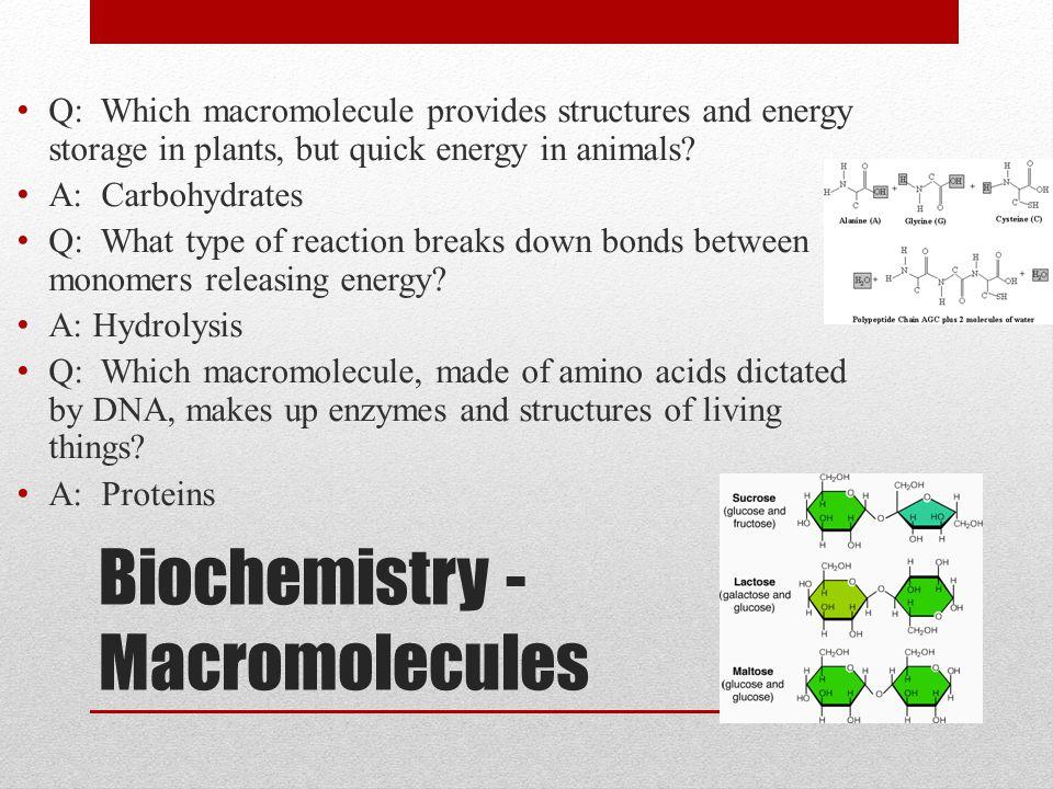 Biochemistry - Macromolecules