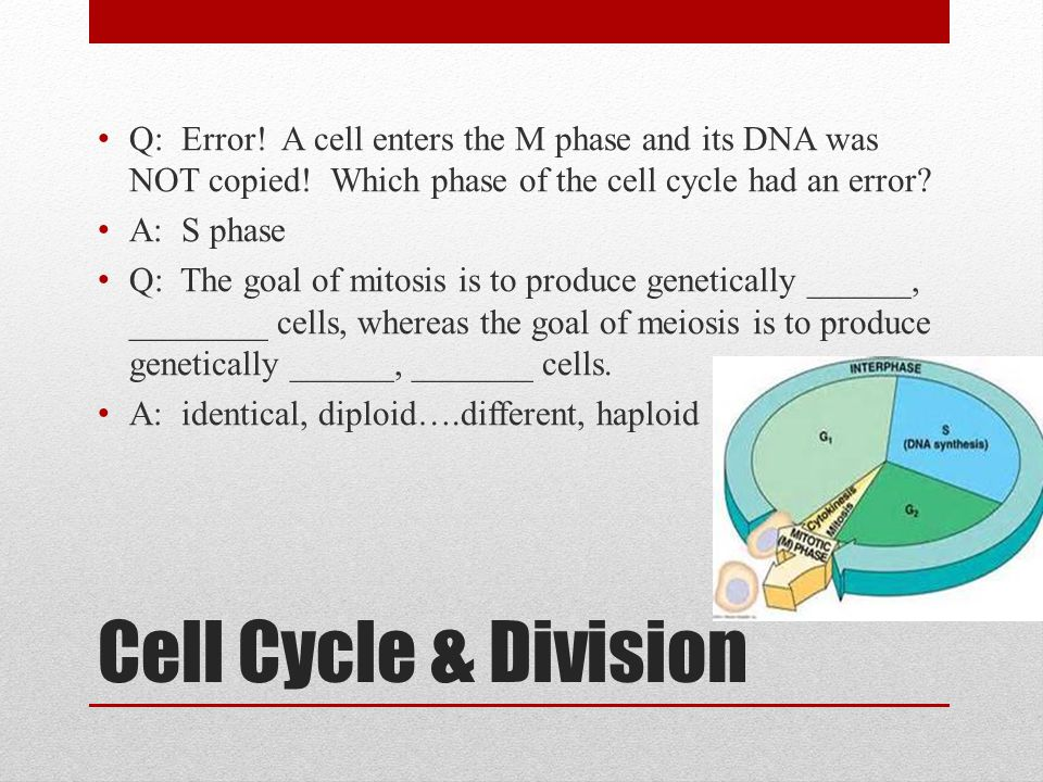 Q: Error. A cell enters the M phase and its DNA was NOT copied