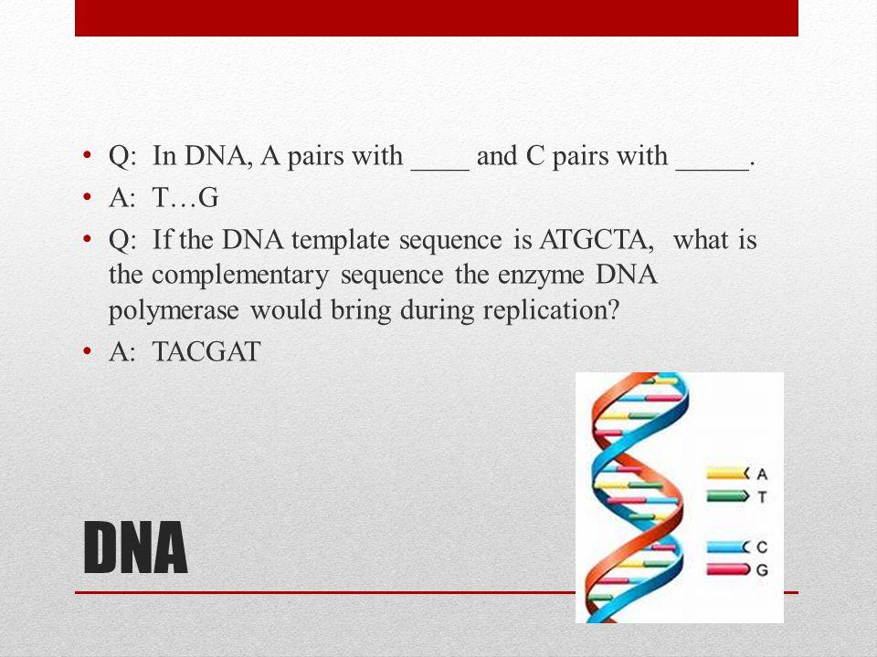 DNA Q: In DNA, A pairs with ____ and C pairs with _____. A: T…G