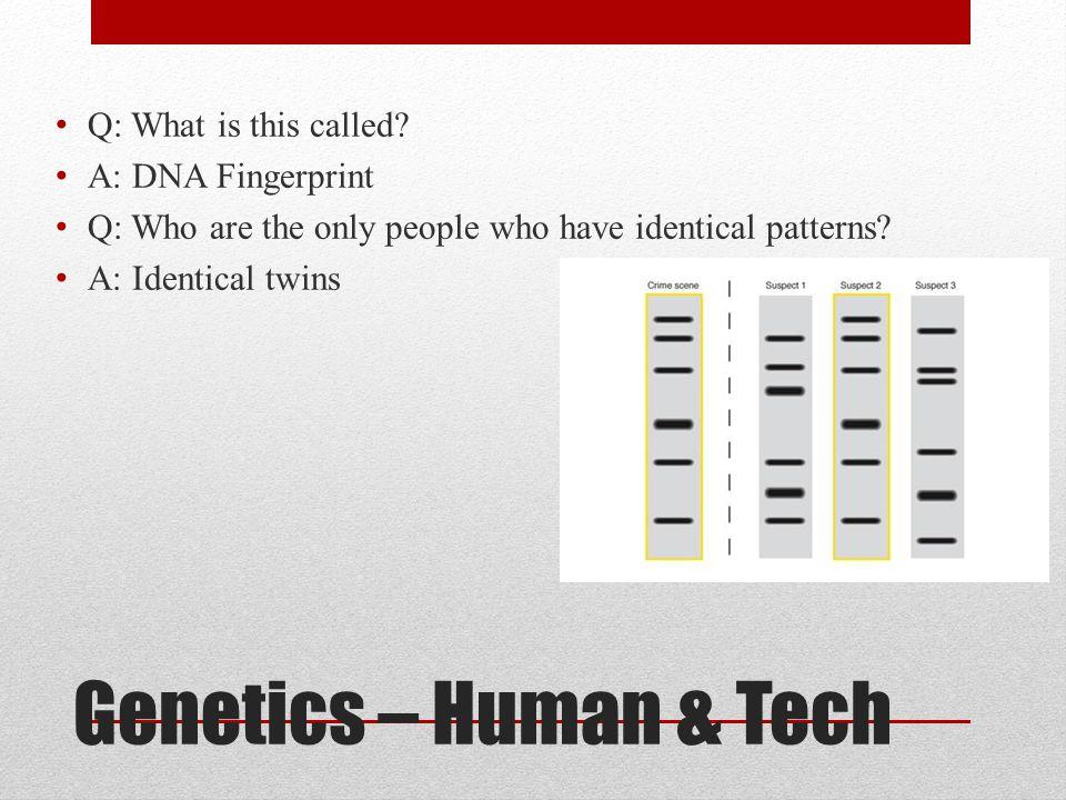Genetics – Human & Tech Q: What is this called A: DNA Fingerprint