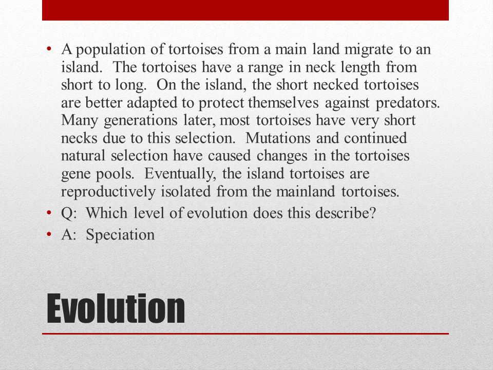 A population of tortoises from a main land migrate to an island