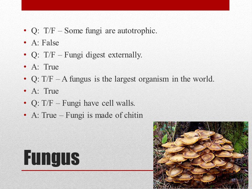 Fungus Q: T/F – Some fungi are autotrophic. A: False