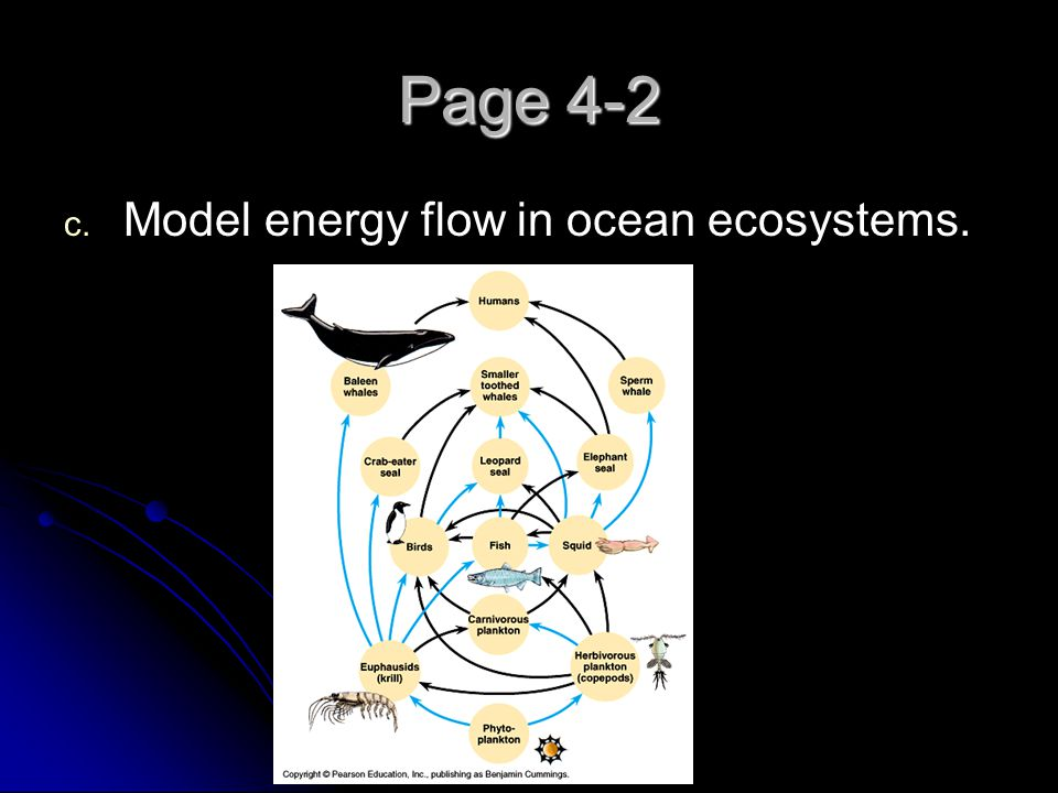 Page 4-2 Model energy flow in ocean ecosystems.