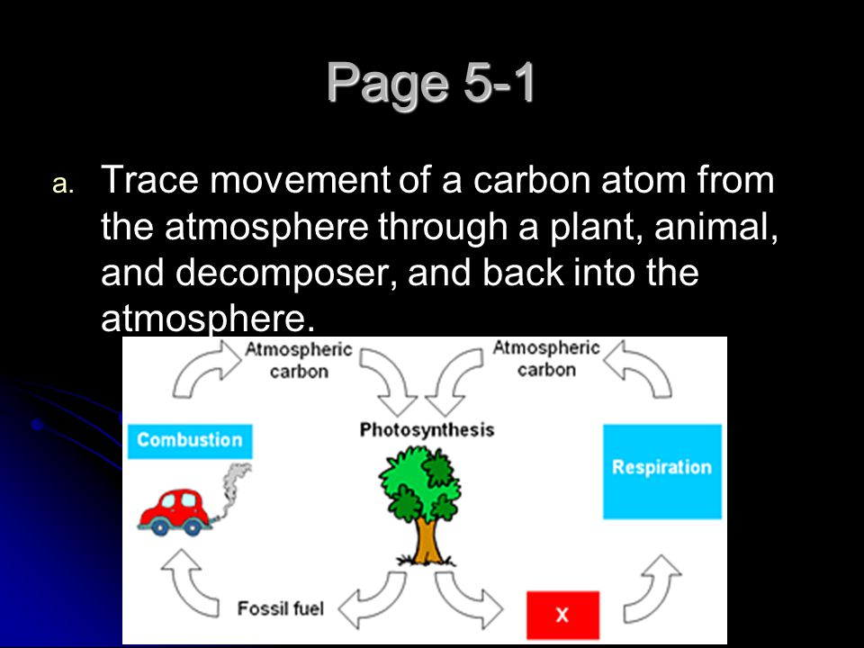 Page 5-1 Trace movement of a carbon atom from the atmosphere through a plant, animal, and decomposer, and back into the atmosphere.