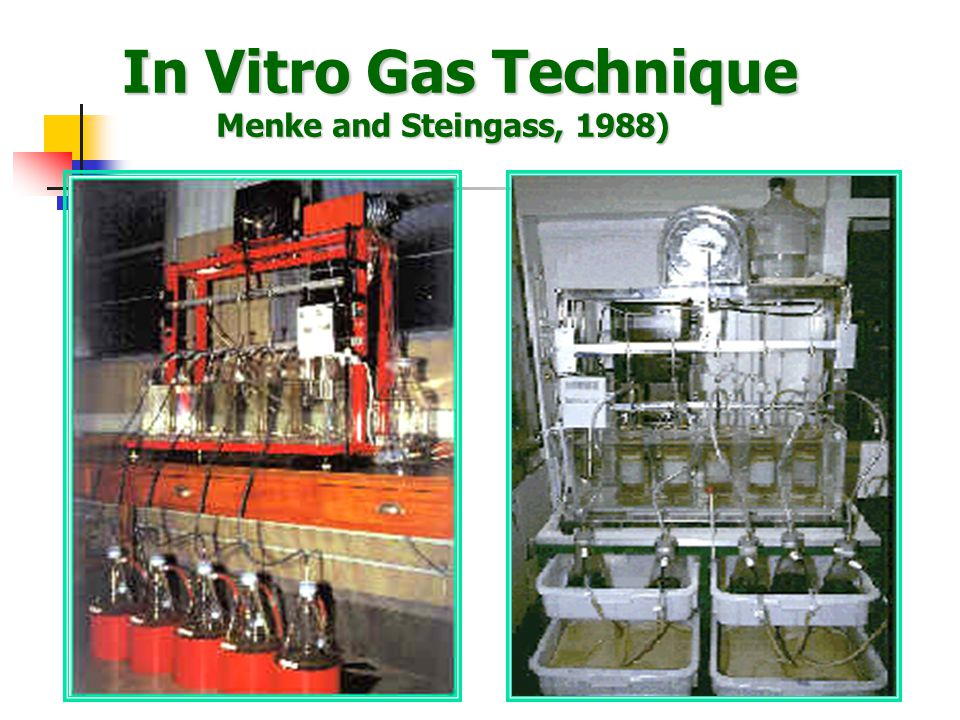 In Vitro Gas Technique Menke and Steingass, 1988)
