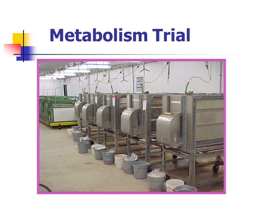 Metabolism Trial