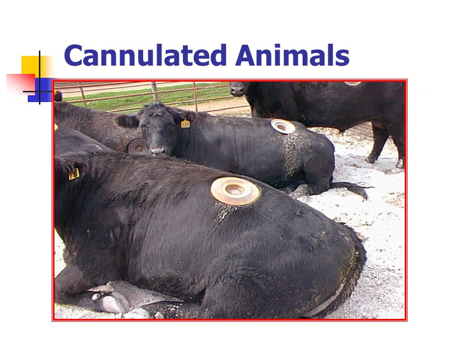 Cannulated Animals