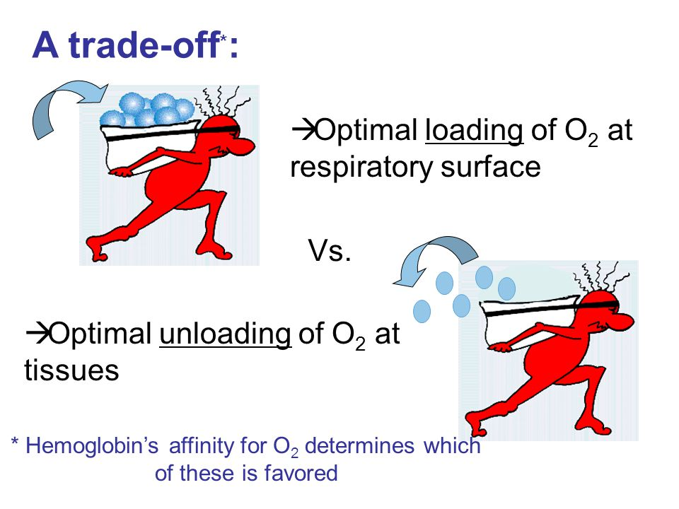 * Hemoglobin's affinity for O2 determines which of these is favored