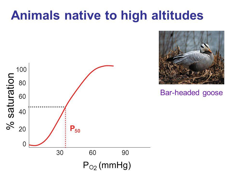 Animals native to high altitudes