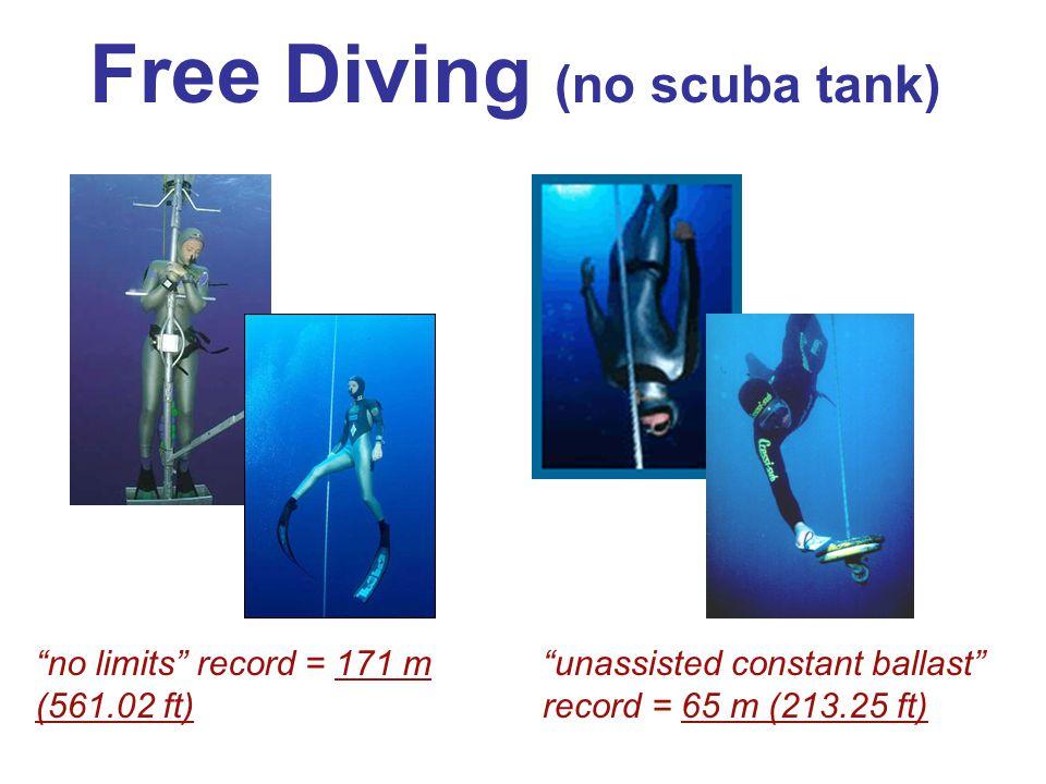 Free Diving (no scuba tank)