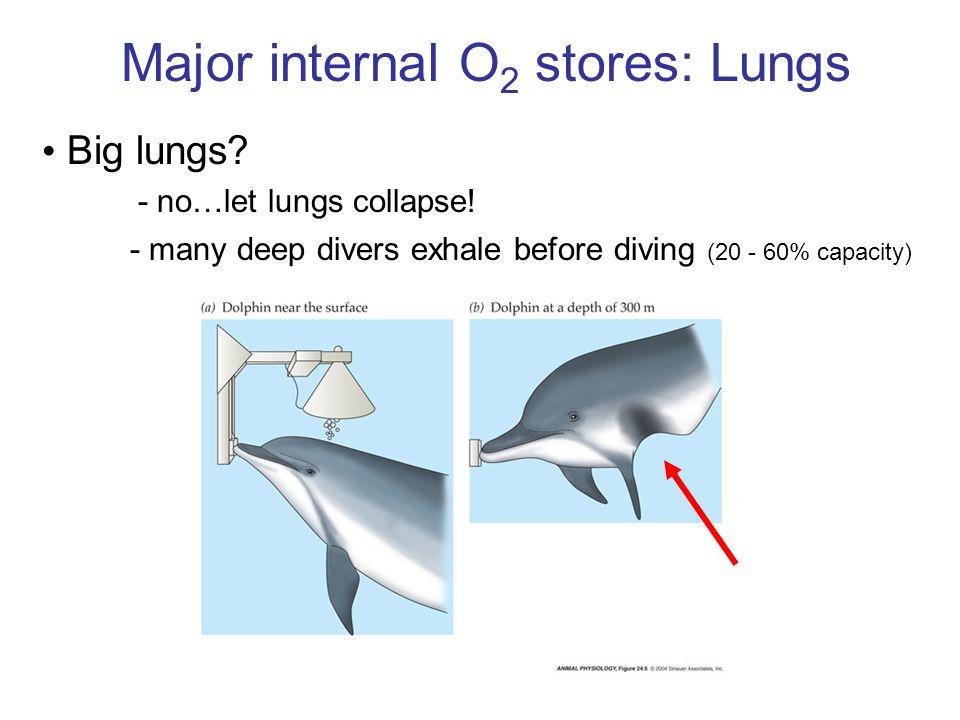 Major internal O2 stores: Lungs