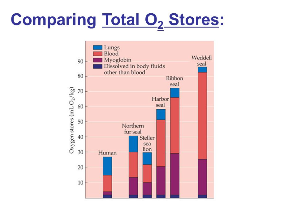 Comparing Total O2 Stores: