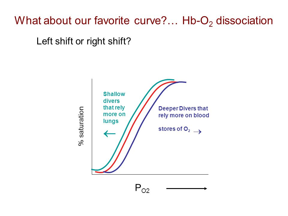  What about our favorite curve … Hb-O2 dissociation