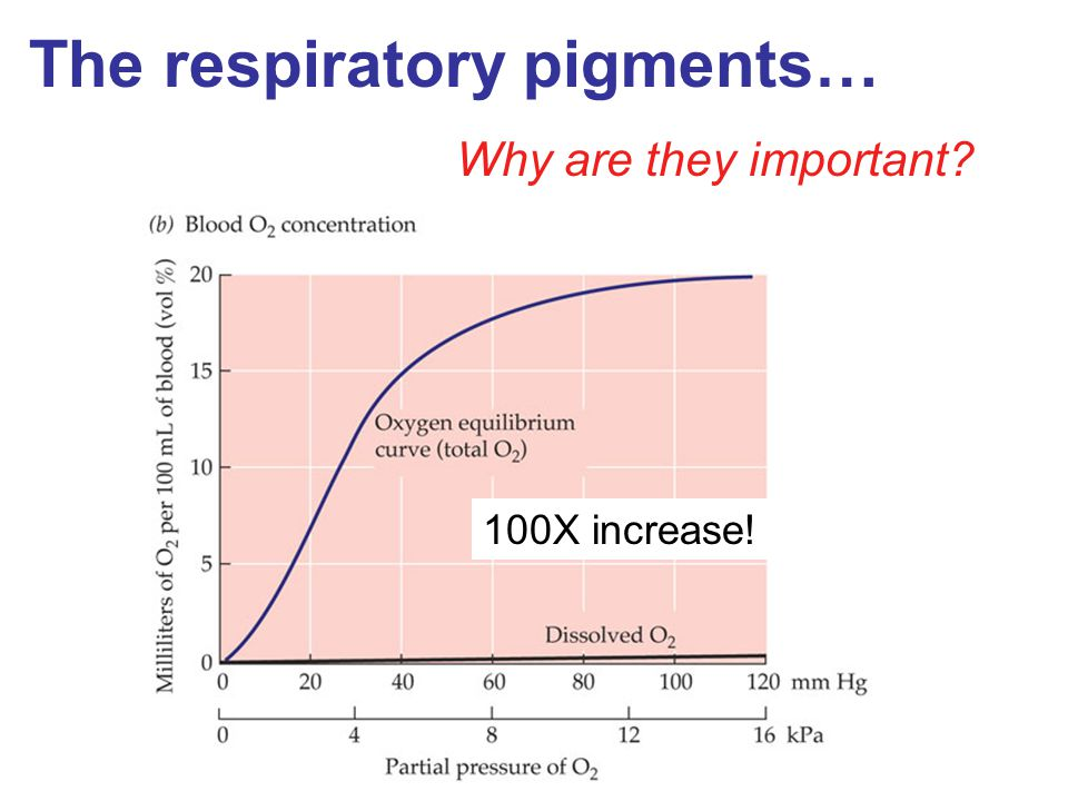 The respiratory pigments…