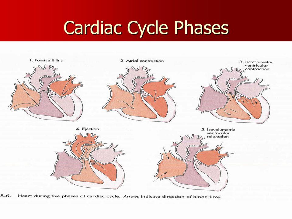 Cardiac Cycle Phases