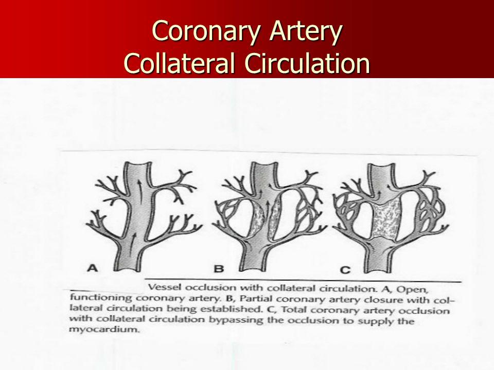 Coronary Artery Collateral Circulation