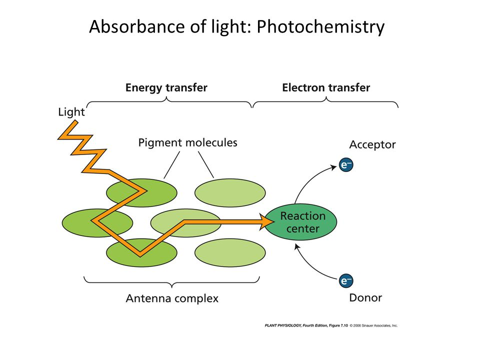 Absorbance of light: Photochemistry