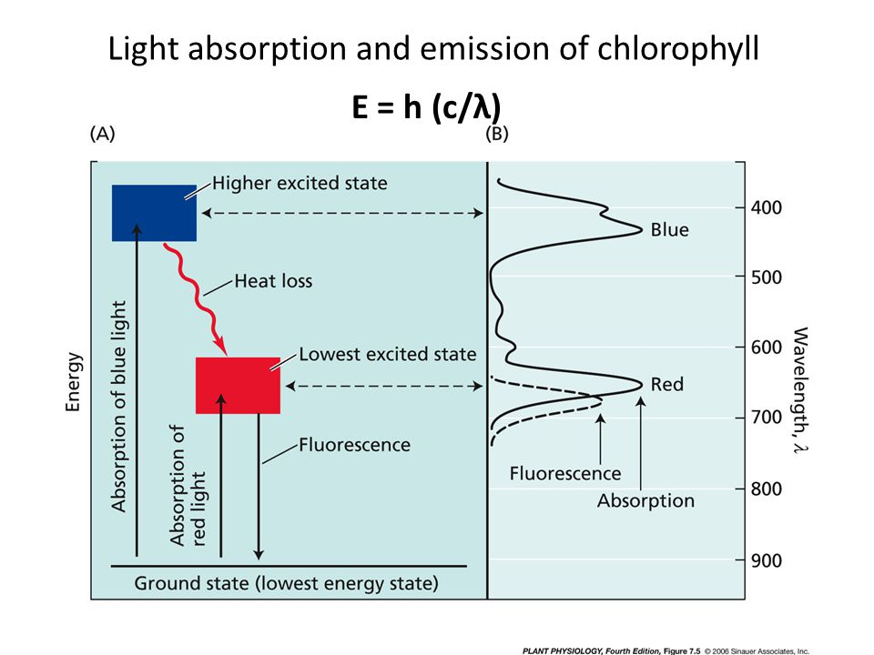 Light absorption and emission of chlorophyll