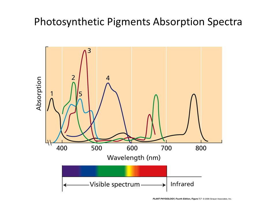 Photosynthetic Pigments Absorption Spectra