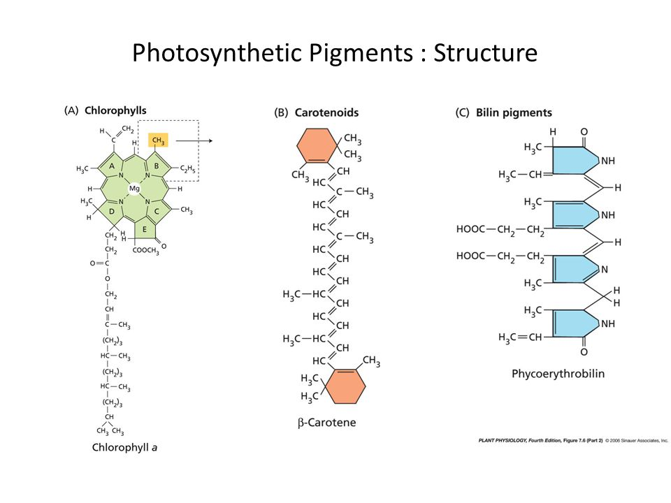 Photosynthetic Pigments : Structure