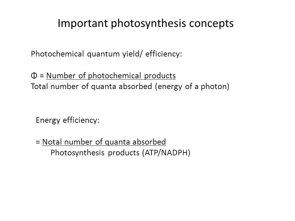 Important photosynthesis concepts