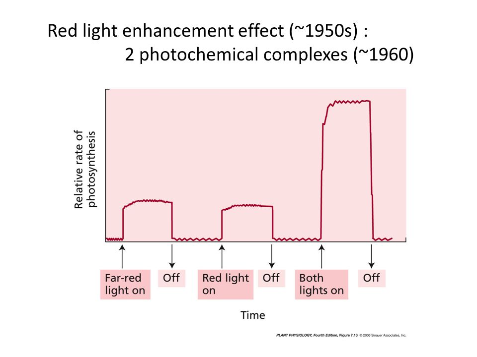 Red light enhancement effect (~1950s) :