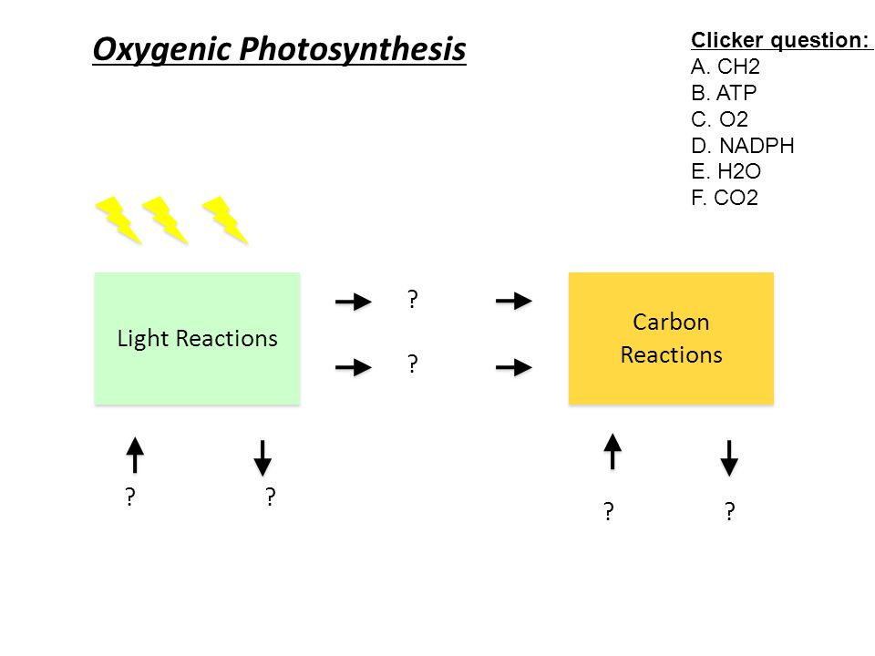 Oxygenic Photosynthesis