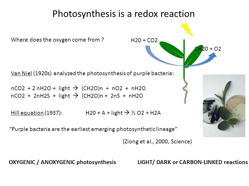 Photosynthesis is a redox reaction