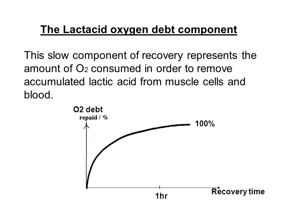 The Lactacid oxygen debt component
