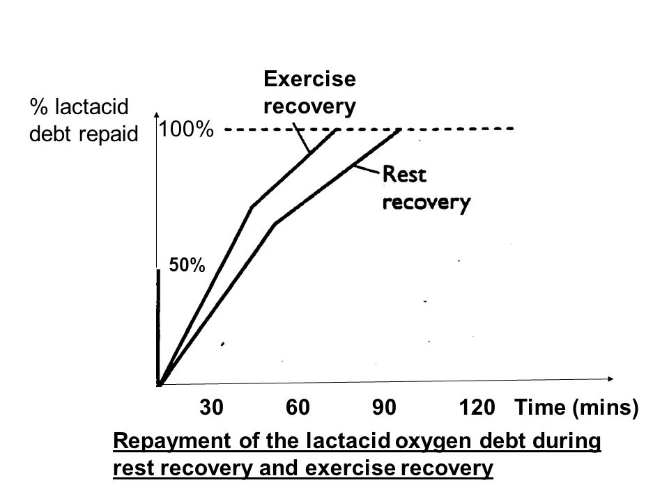 Exercise recovery % lactacid debt repaid 100% 30 60 90 120 Time (mins)