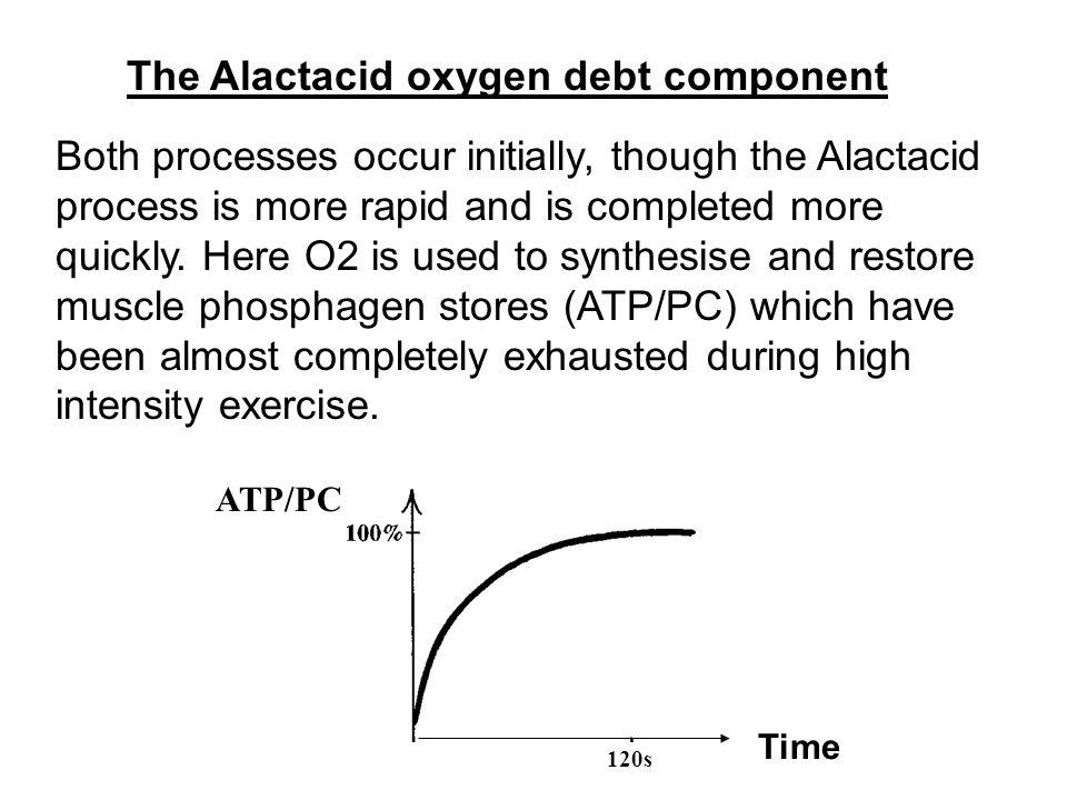 The Alactacid oxygen debt component