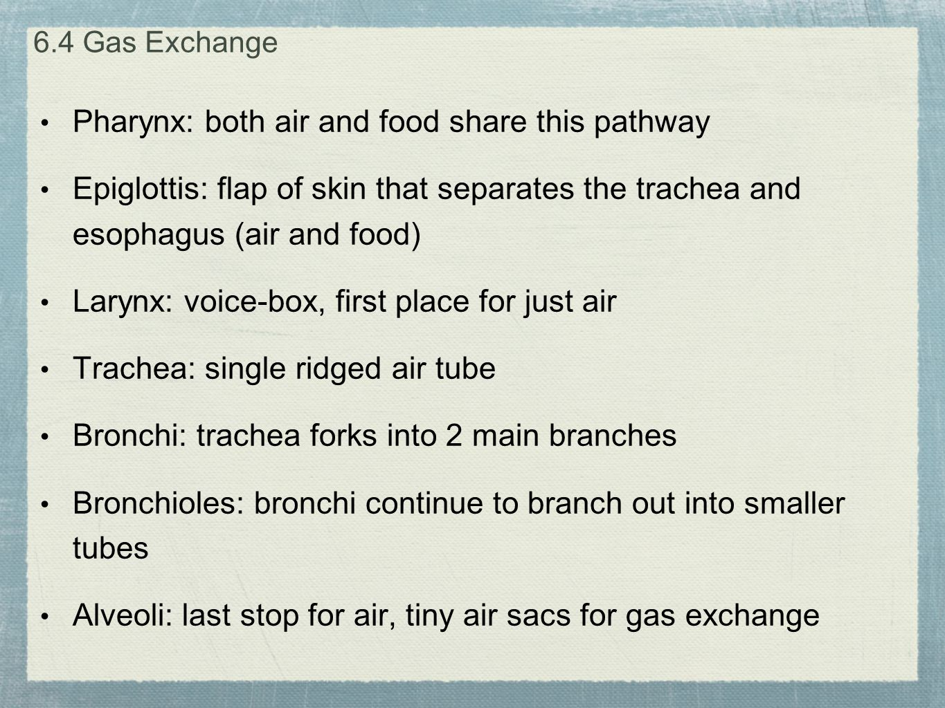 Pharynx: both air and food share this pathway