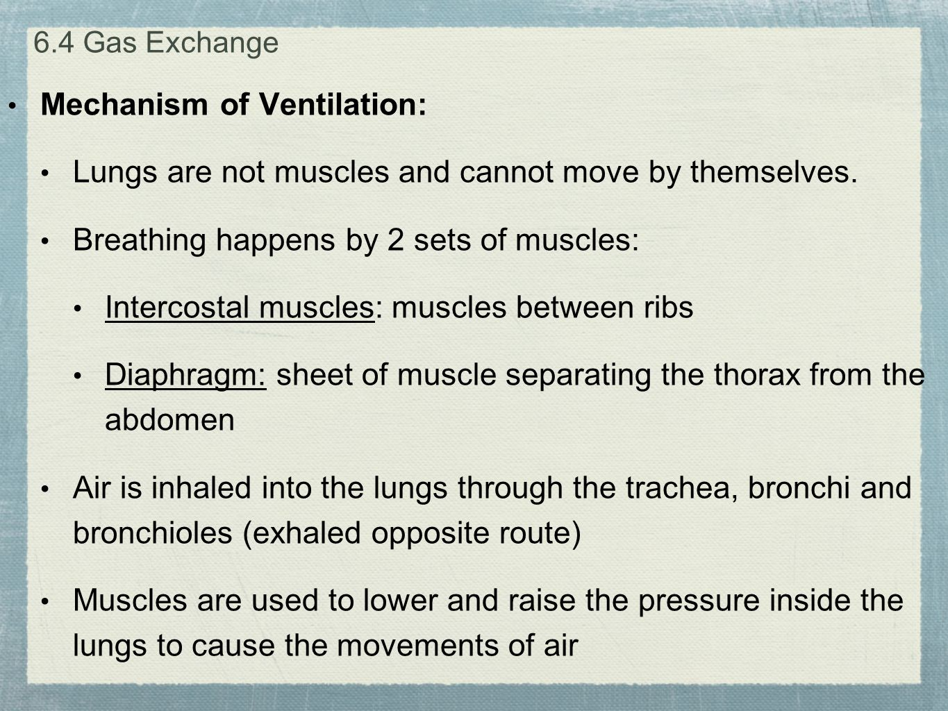 Mechanism of Ventilation: