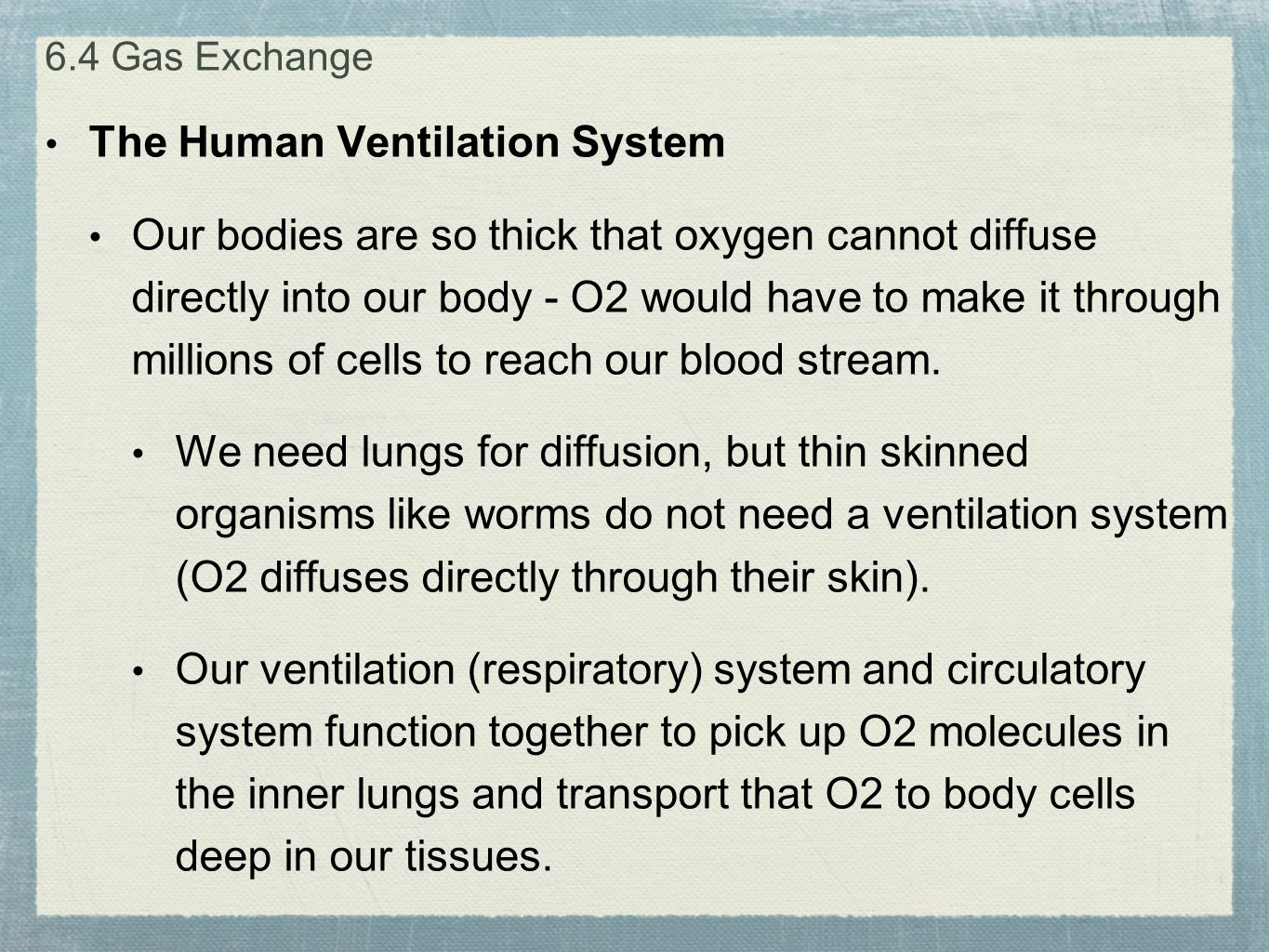 The Human Ventilation System