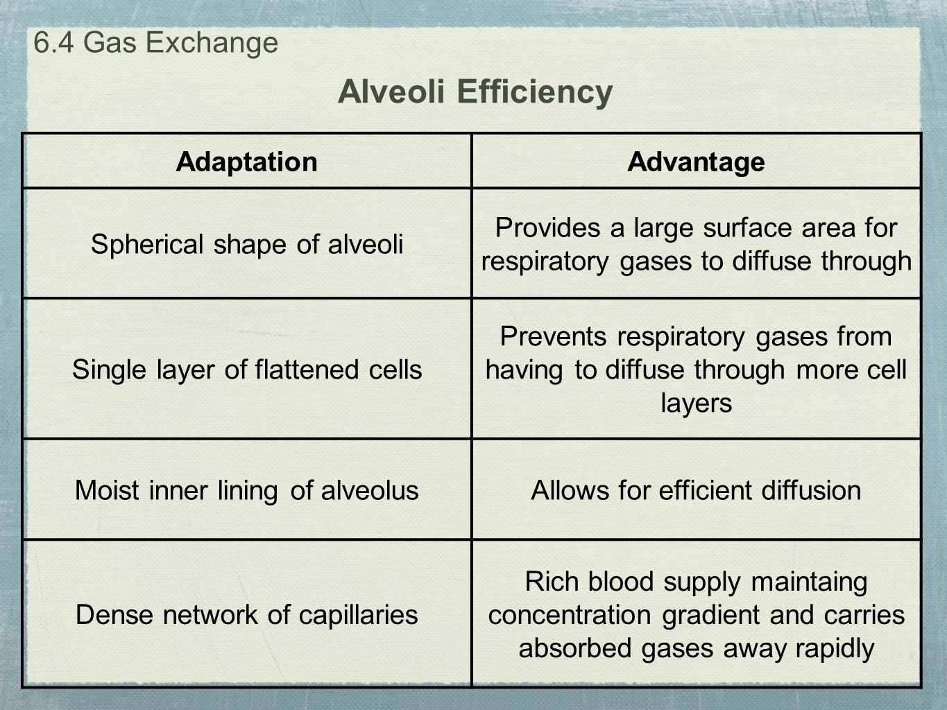 Alveoli Efficiency 6.4 Gas Exchange Adaptation Advantage