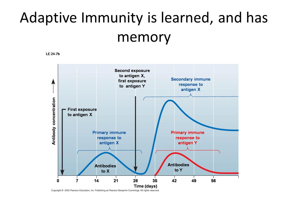 What Is Adaptive Memory?