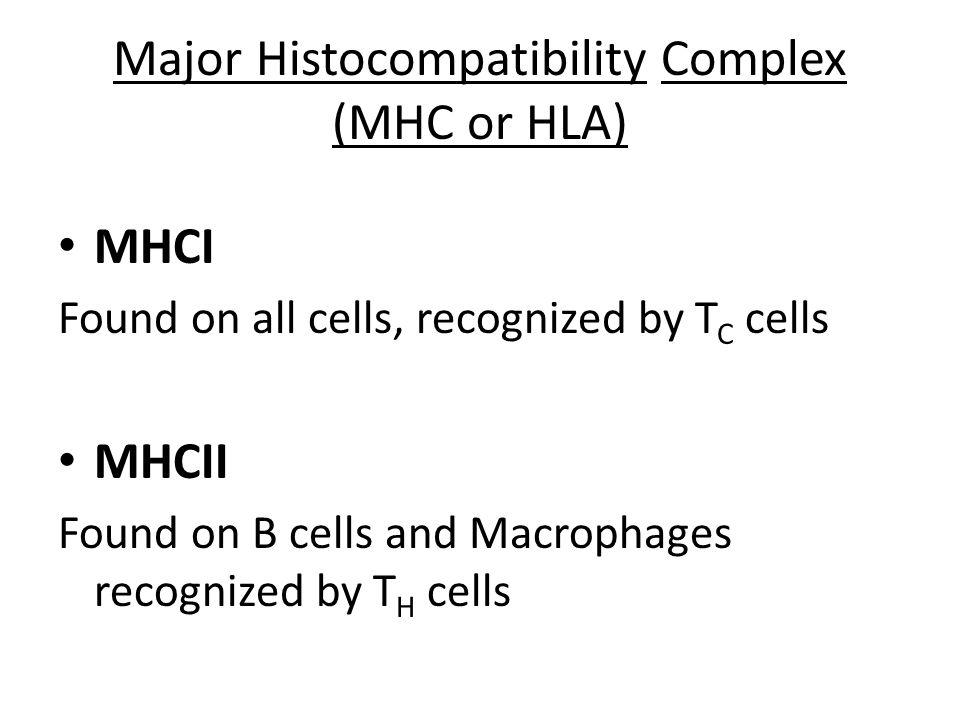 Major Histocompatibility Complex (MHC or HLA)