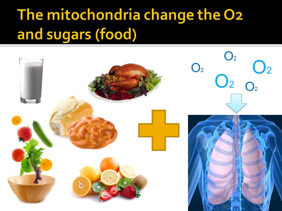 The mitochondria change the O2 and sugars (food)