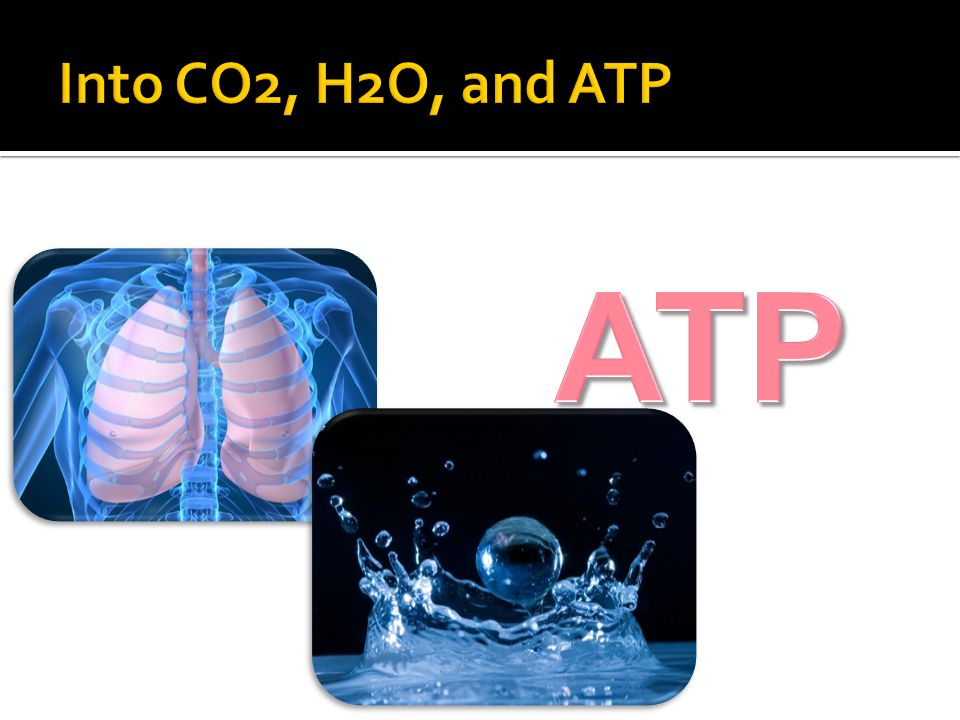 Into CO2, H2O, and ATP ATP