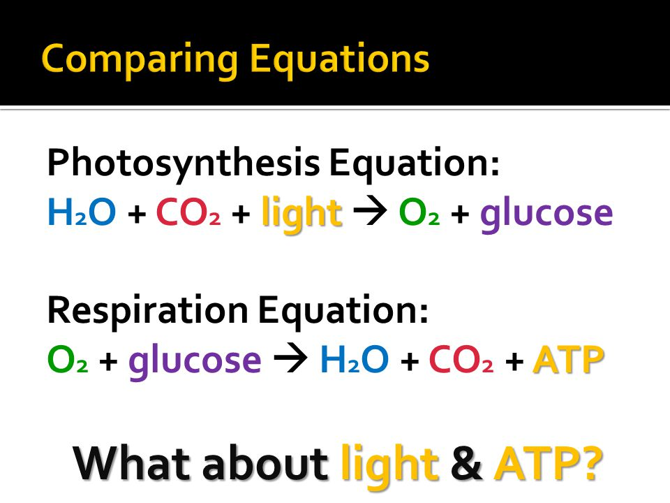 What about light & ATP Comparing Equations Photosynthesis Equation: