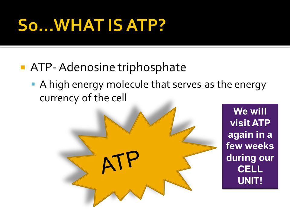We will visit ATP again in a few weeks during our CELL UNIT!