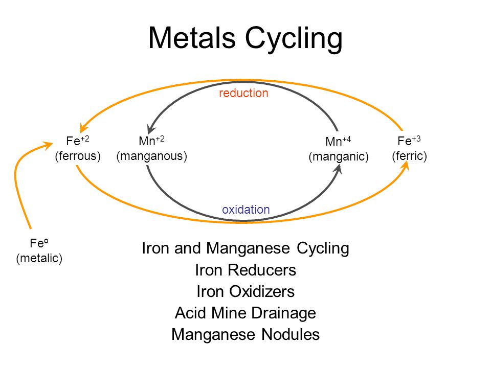 Iron and Manganese Cycling