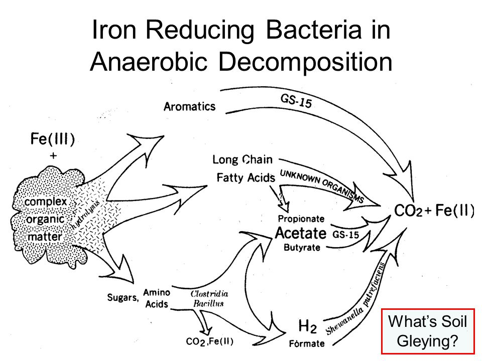 Iron Reducing Bacteria in Anaerobic Decomposition