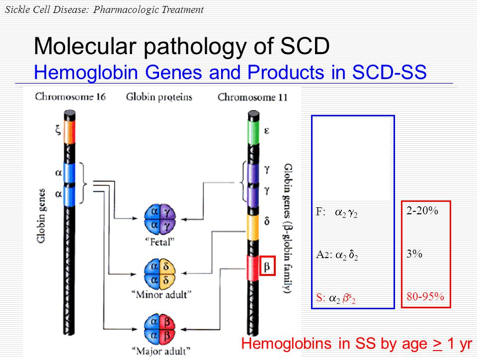 Molecular pathology of SCD Hemoglobin Genes and Products in SCD-SS